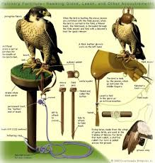 FalconryEquipment