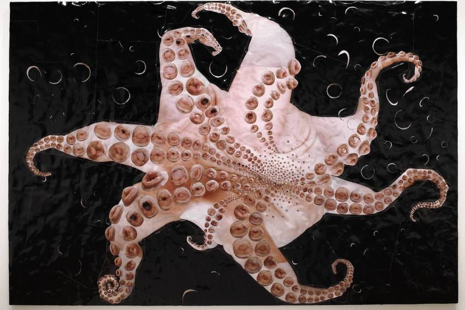 Underside of an Octopus