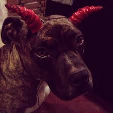 Pittbull With Horns