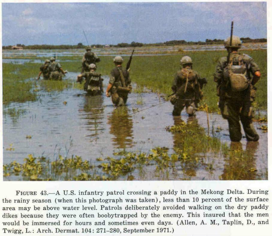 Rumor of War Rice Paddies